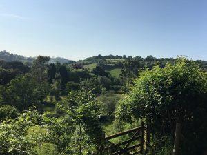 View to Vineyard