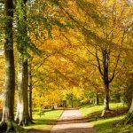 Killerton National Trust