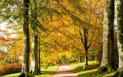 Autumn adventures in Devon