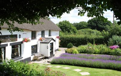 Great places to eat out in Mid-Devon